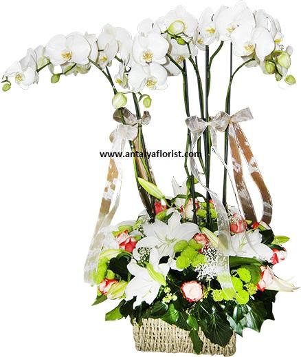 krizantem buket Şık Beyaz Orkide ve Arajman