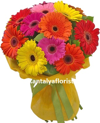 antalya flowers shop 15pc Gerbera Bouquet