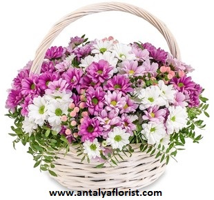 antalya flowers shop Stylish Basket Chrysanthemum
