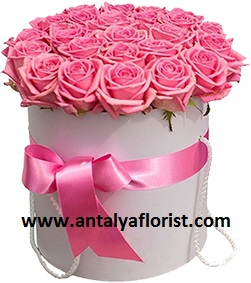 antalya flowers shop Box 25pc Pink Rose