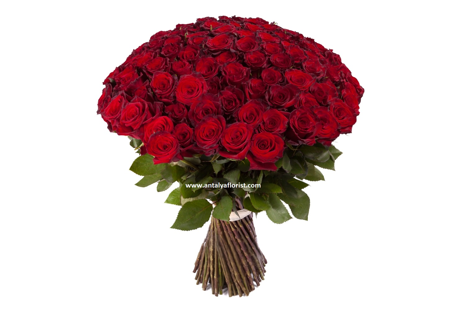 antalya flowers shop 101pc Red Rose 1st Class